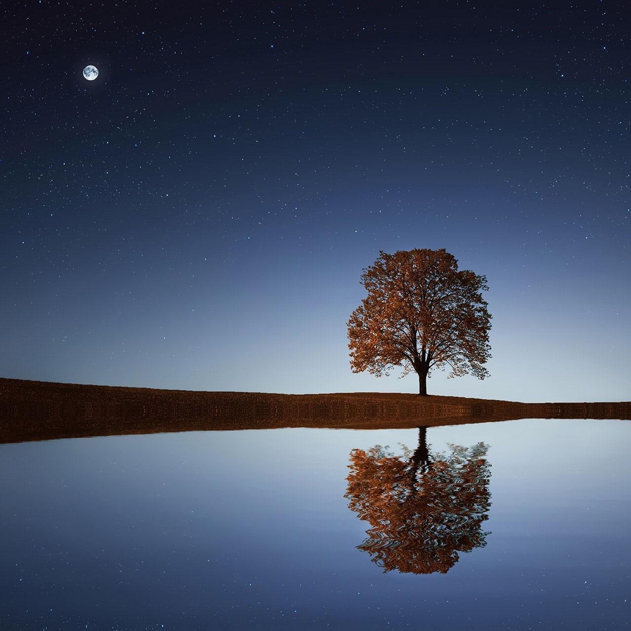 arbre sur fond bleu l'arbre magique